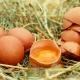 Eieren in nest | Mijn Keus