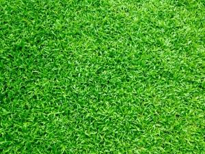 stuk van een grasveld | Mijn Keus